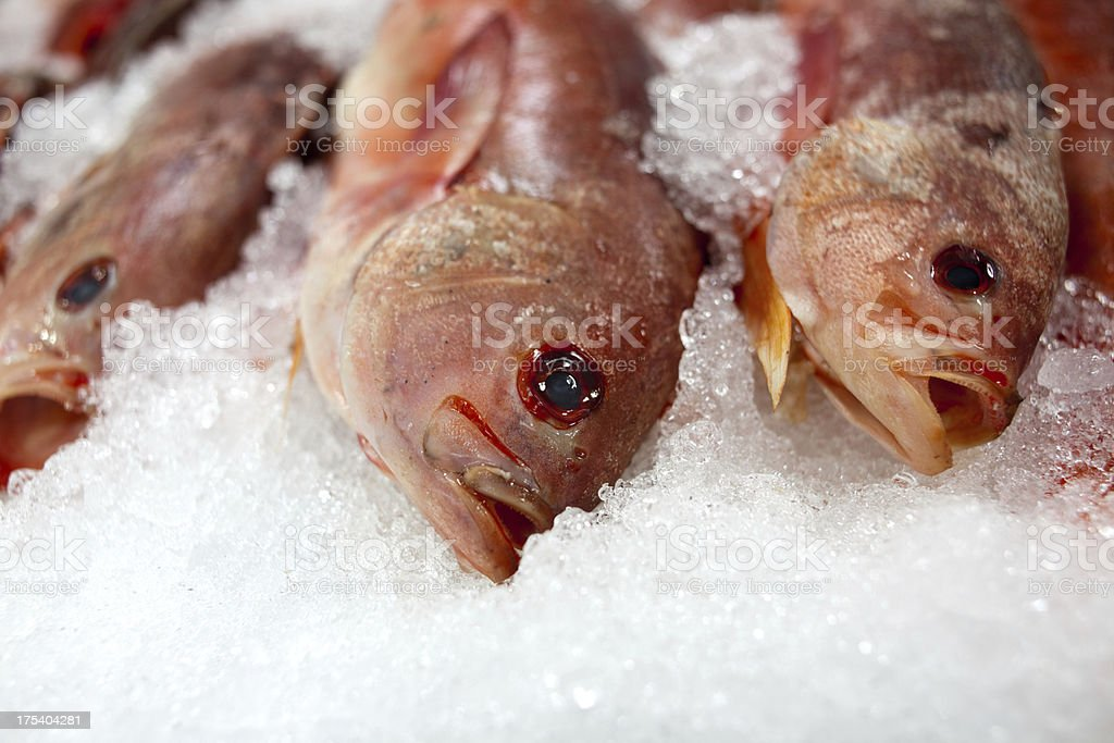 Fresh Wild Snapper royalty-free stock photo