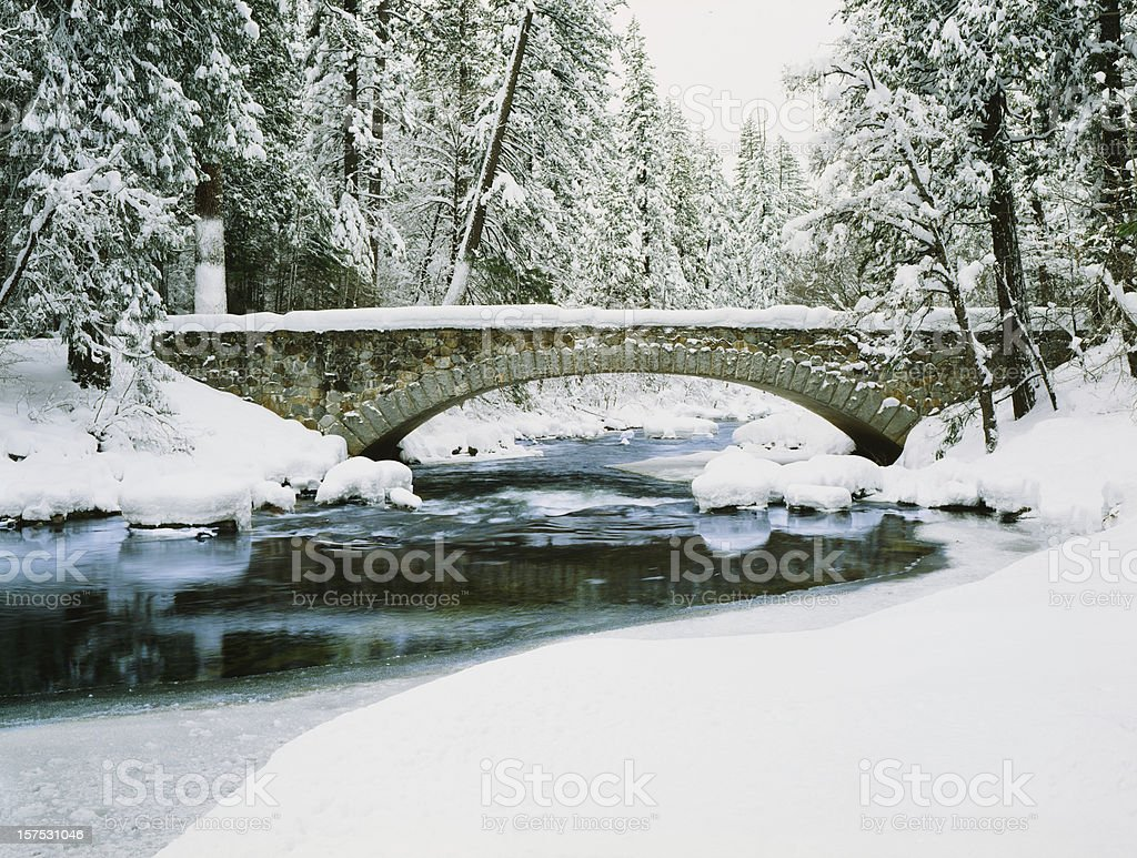 Fresh Winter snow laden pine trees along the Merced River royalty-free stock photo