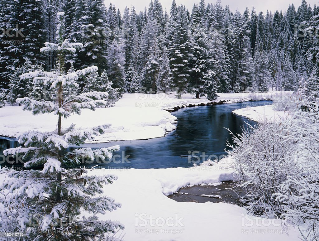 Fresh Winter snows laden pine trees and River stock photo
