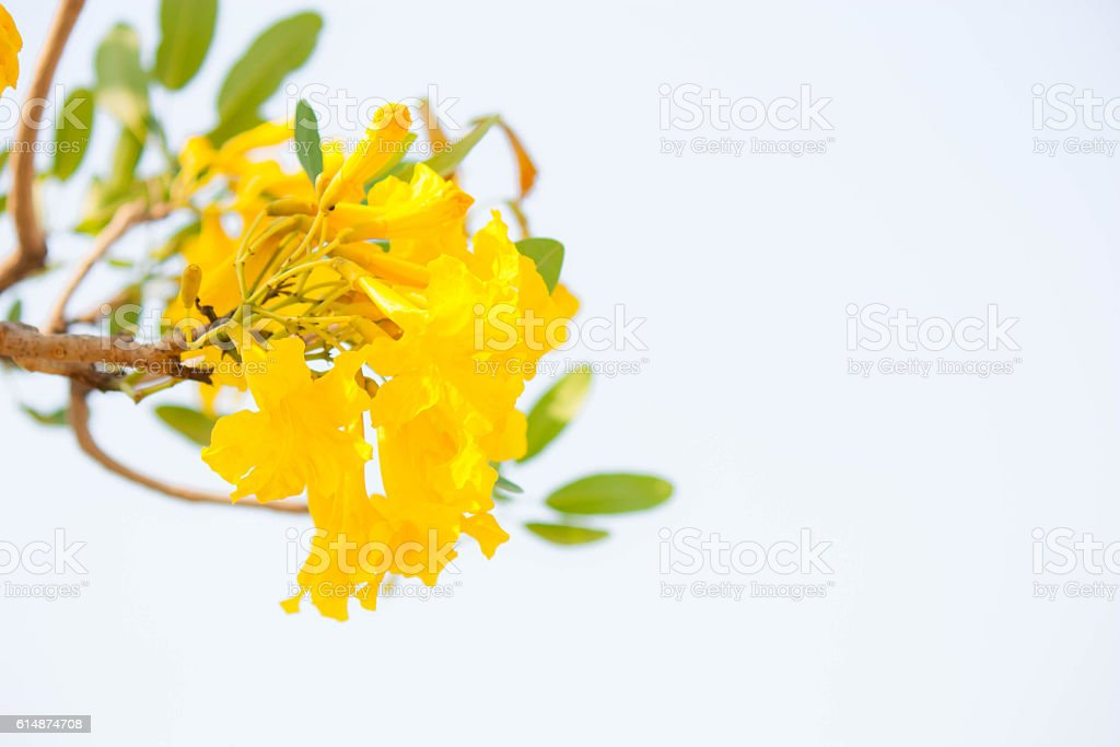 Fresh yellow bouquet flower and relax time. stock photo