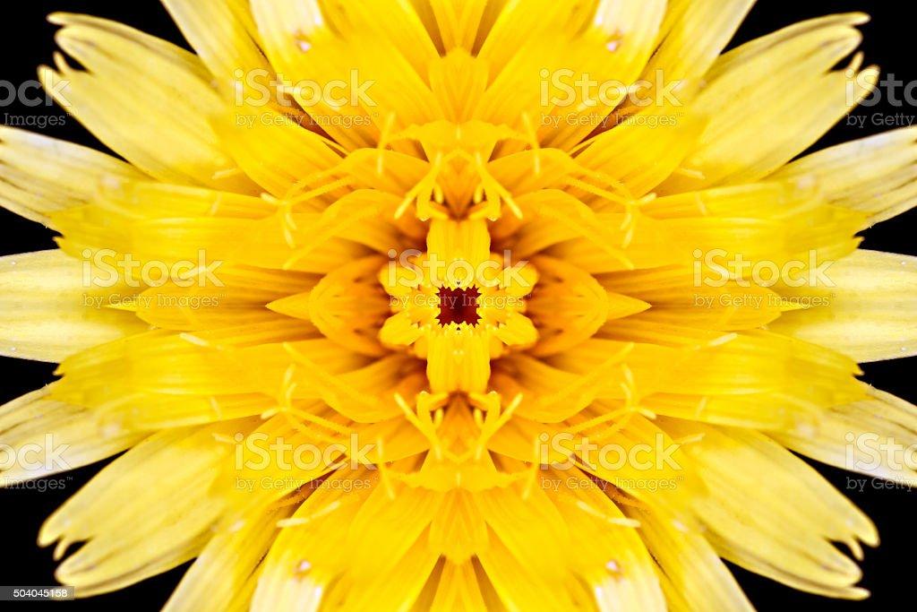 Fresh yellow dandelion flower petal surreal shaped symmetrical kaleidoscope stock photo