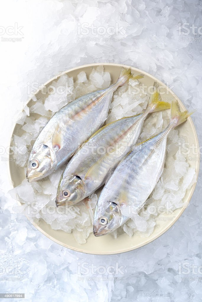 Fresh yellowtail fishes on a plate stock photo