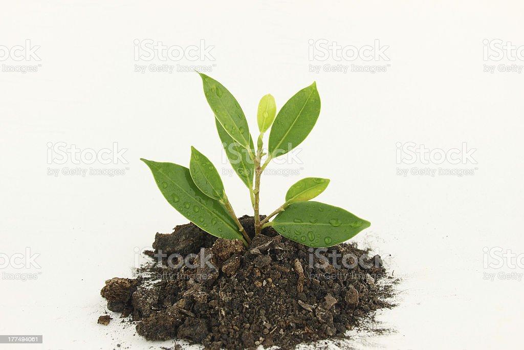 Fresh young tree stock photo