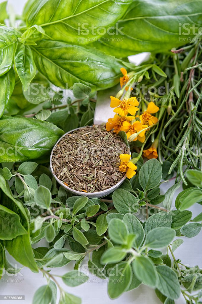 Fresh-Dry Herbs Basil Thai Basil Tarragon Rosemary and Oregano stock photo