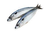 Fresh-frozen mackerel couple on a white background