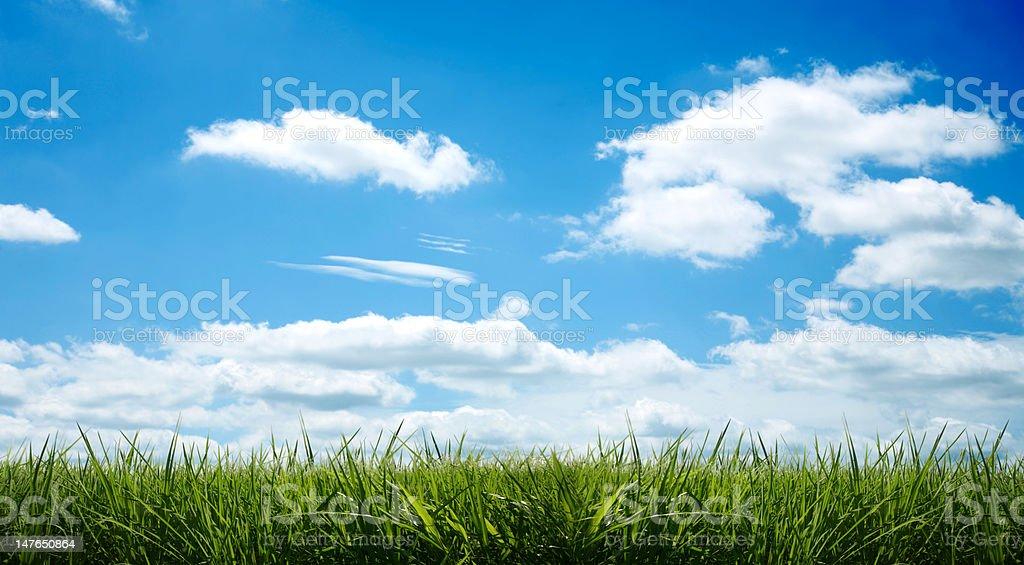 Freshh Gras schönen Wolkengebilde XXL Lizenzfreies stock-foto
