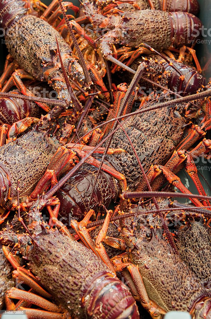 Freshly caught Crayfish in a fishing bin. stock photo