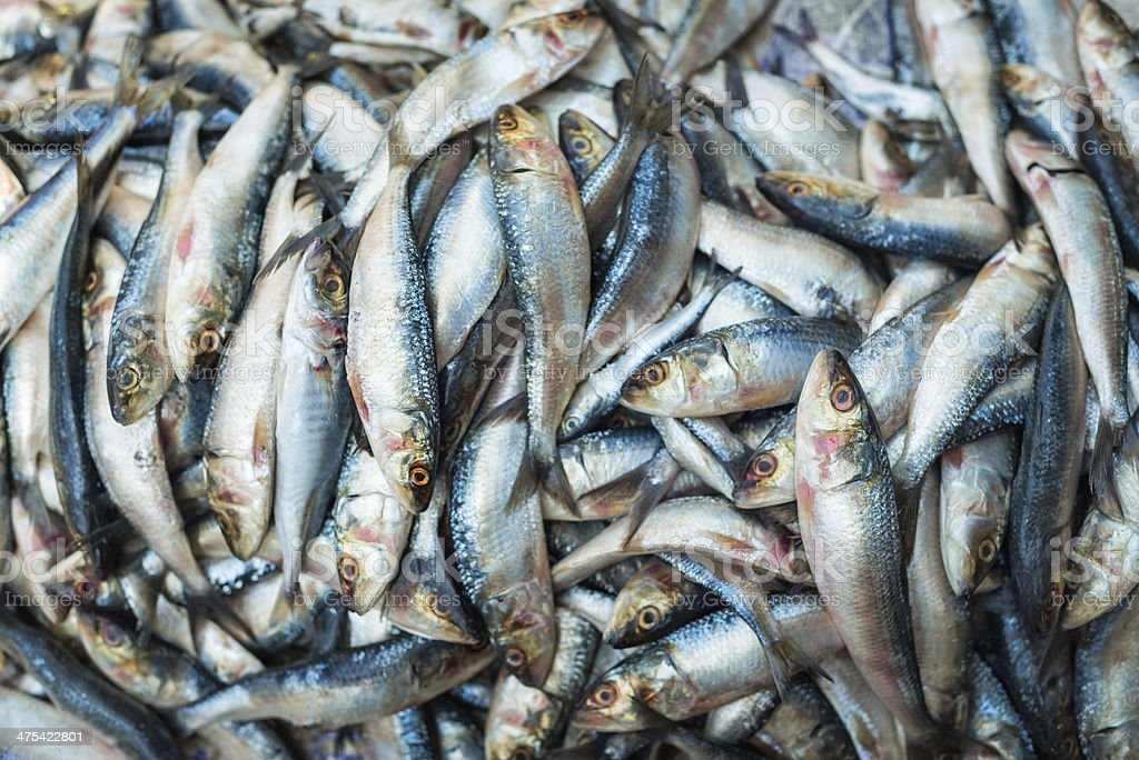 Freshly Caught Fish at an Indian Market royalty-free stock photo