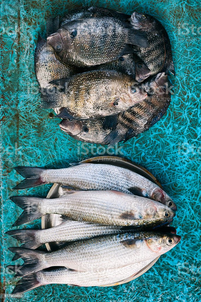 Freshly Caught Fish in Kochi, India stock photo