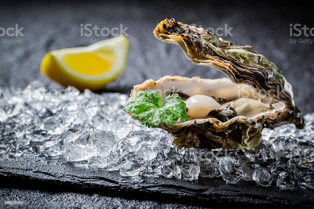 Freshly caught oysters on crushed ice stock photo