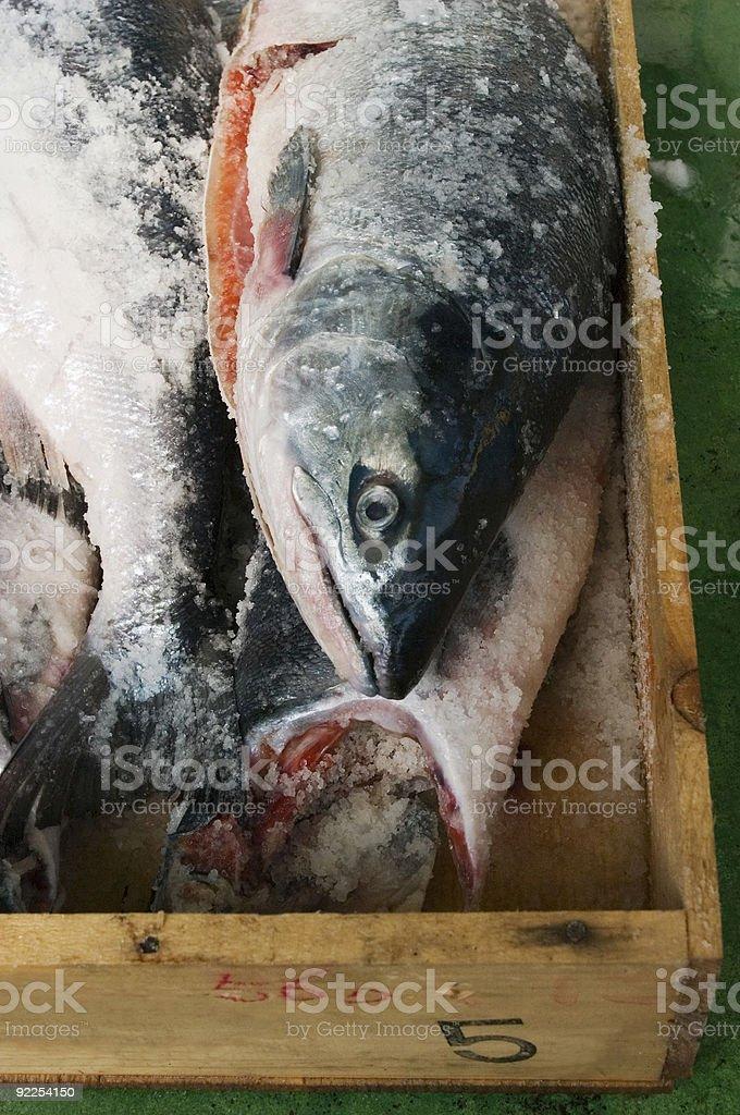 Freshly caught salmon. stock photo