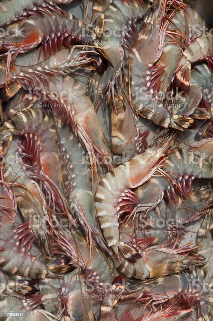 Freshly caught Tiger Prawn background. royalty-free stock photo