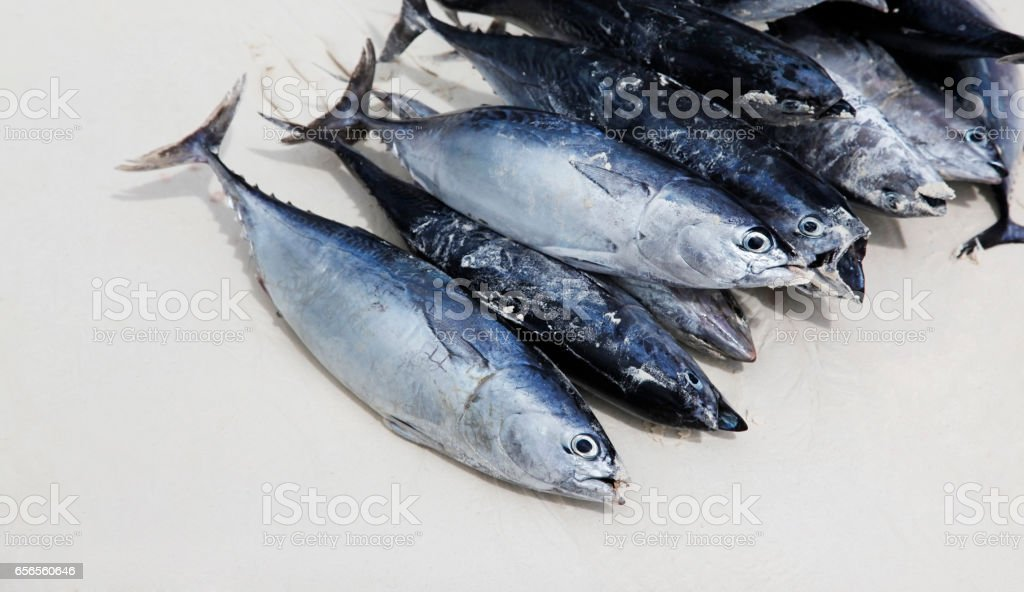 Freshly caught tuna in the sand. Zanzibar, Tanzania stock photo