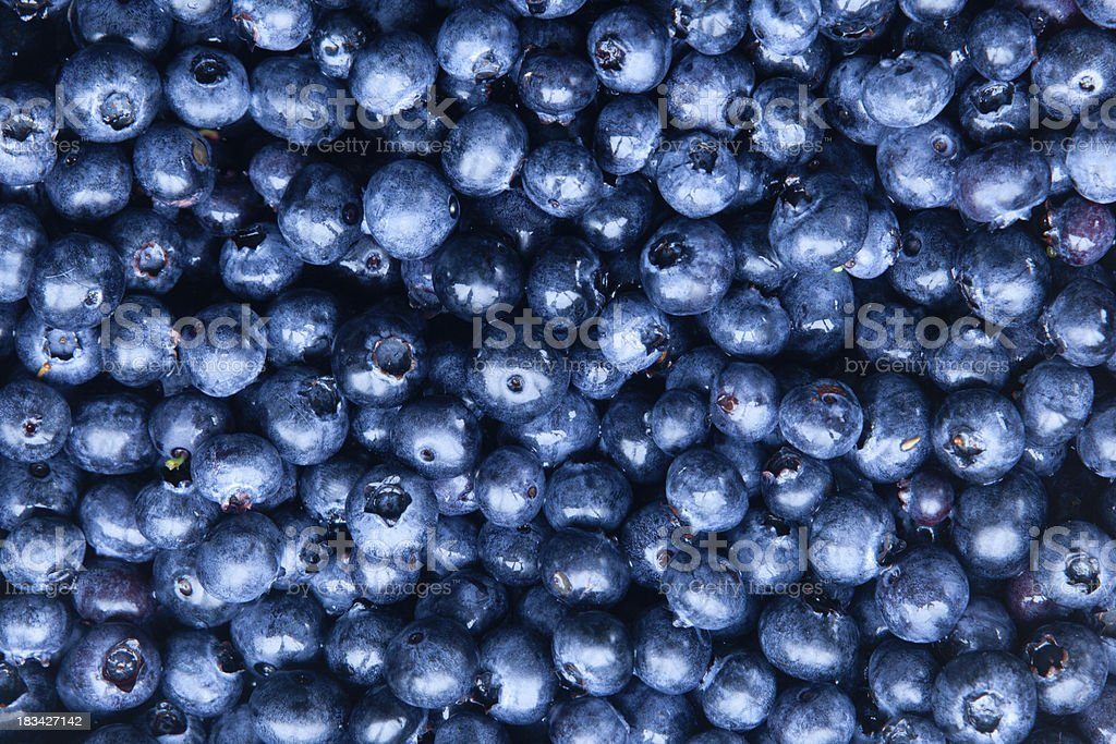 Freshly collected blueberries stock photo