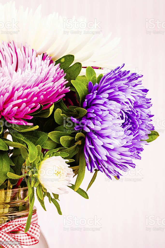 Freshly Cut Asters on Pink Background stock photo