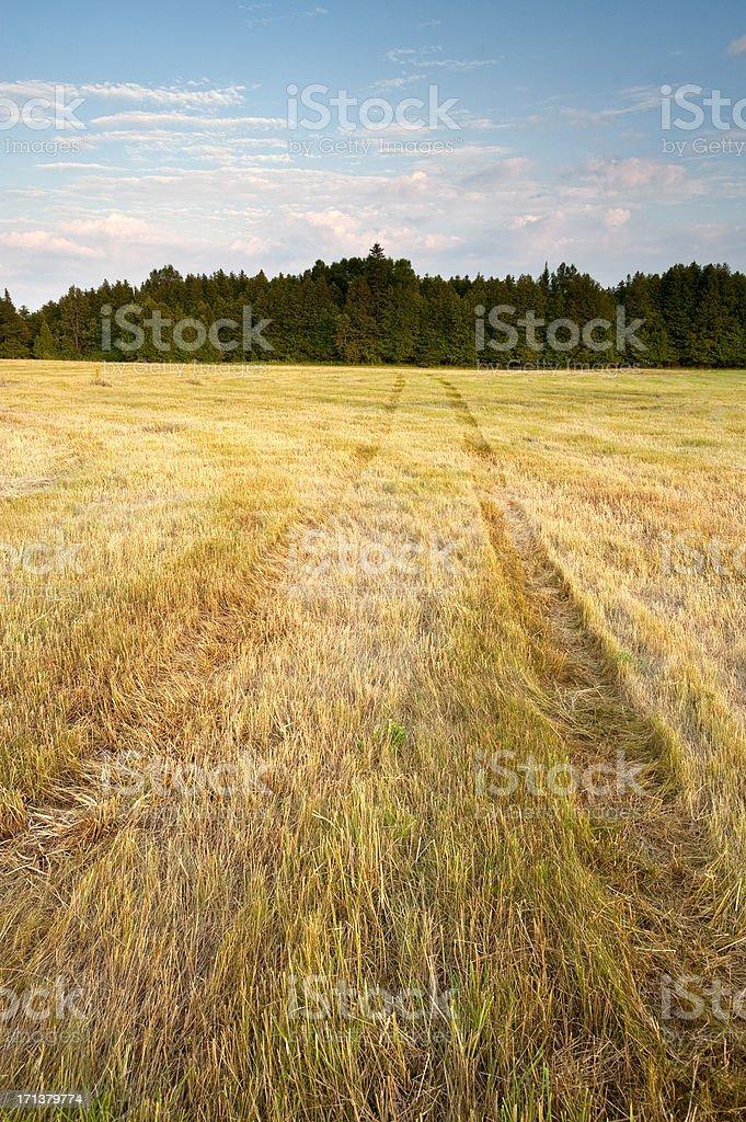Freshly cut farm field and tracks stock photo