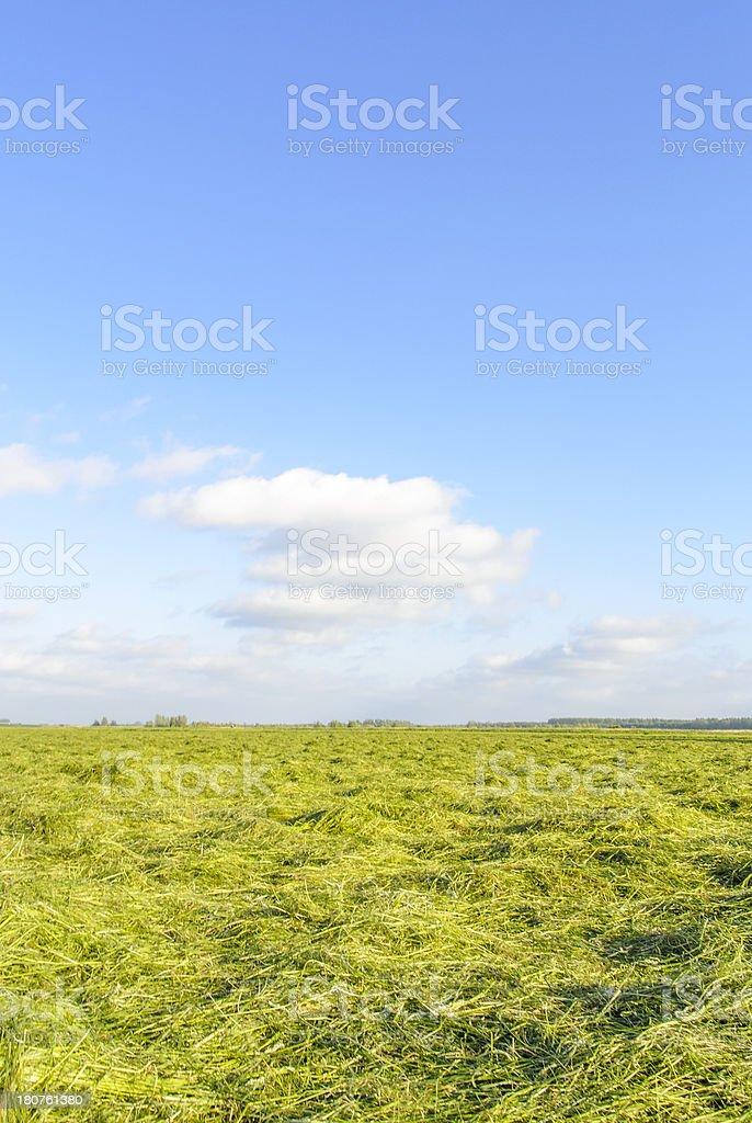 Freshly cut grass stock photo