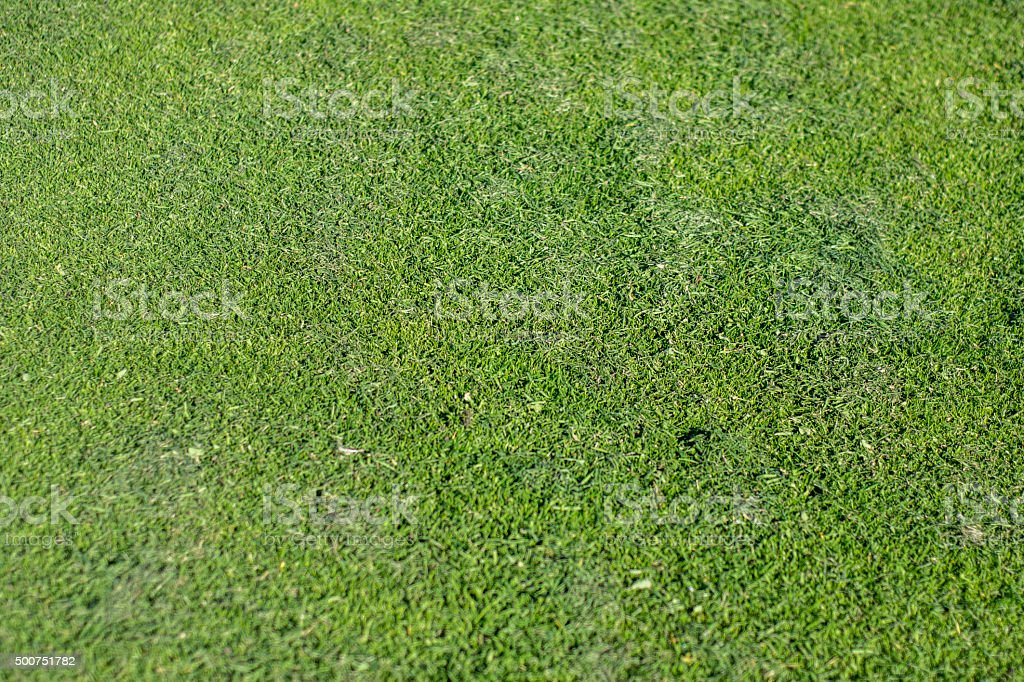 Freshly cut grass with out of focus copy space stock photo
