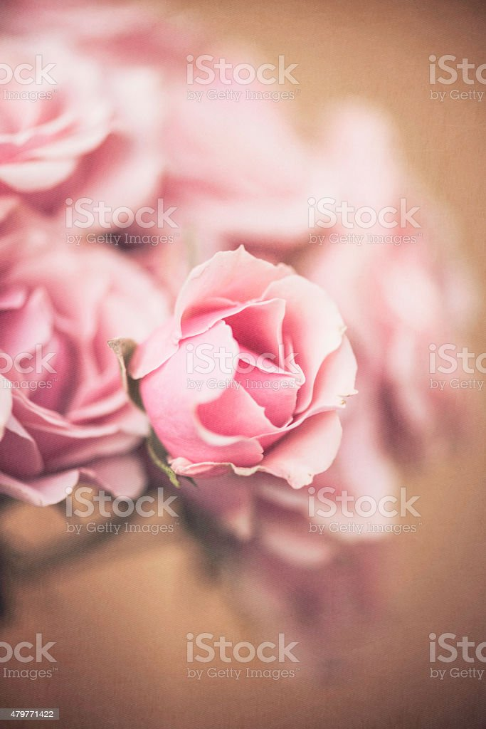 Freshly cut miniature pink rose bouquet stock photo