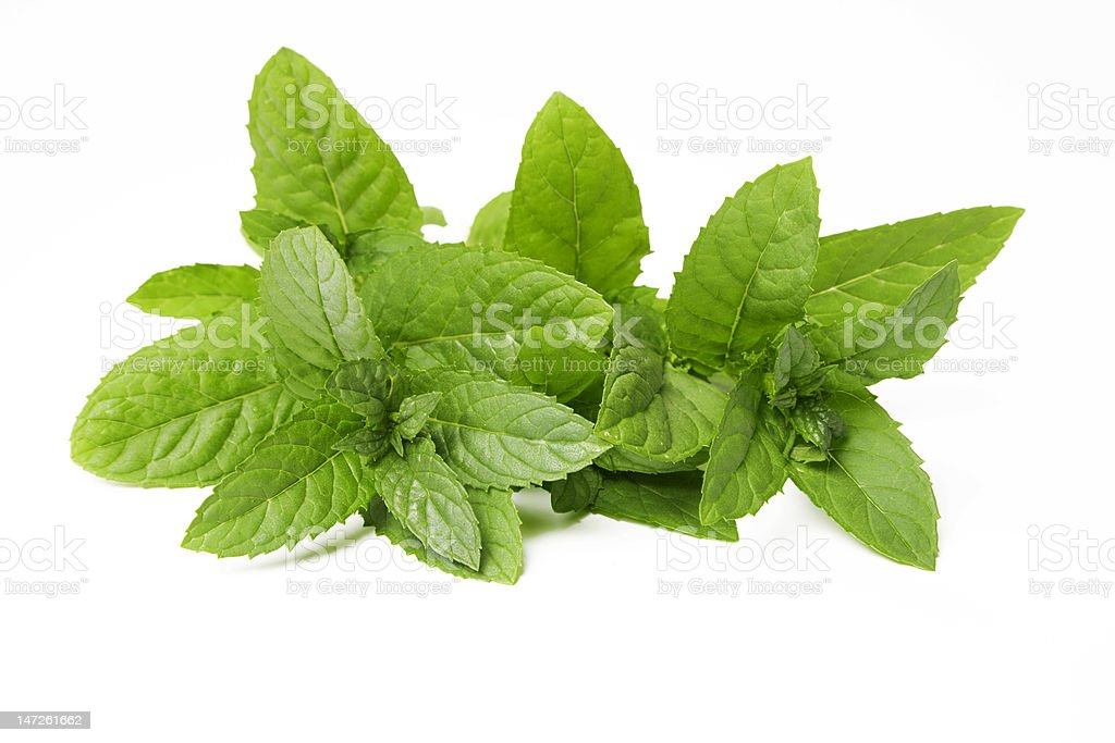 Freshly cut mint leaves on a white background  royalty-free stock photo