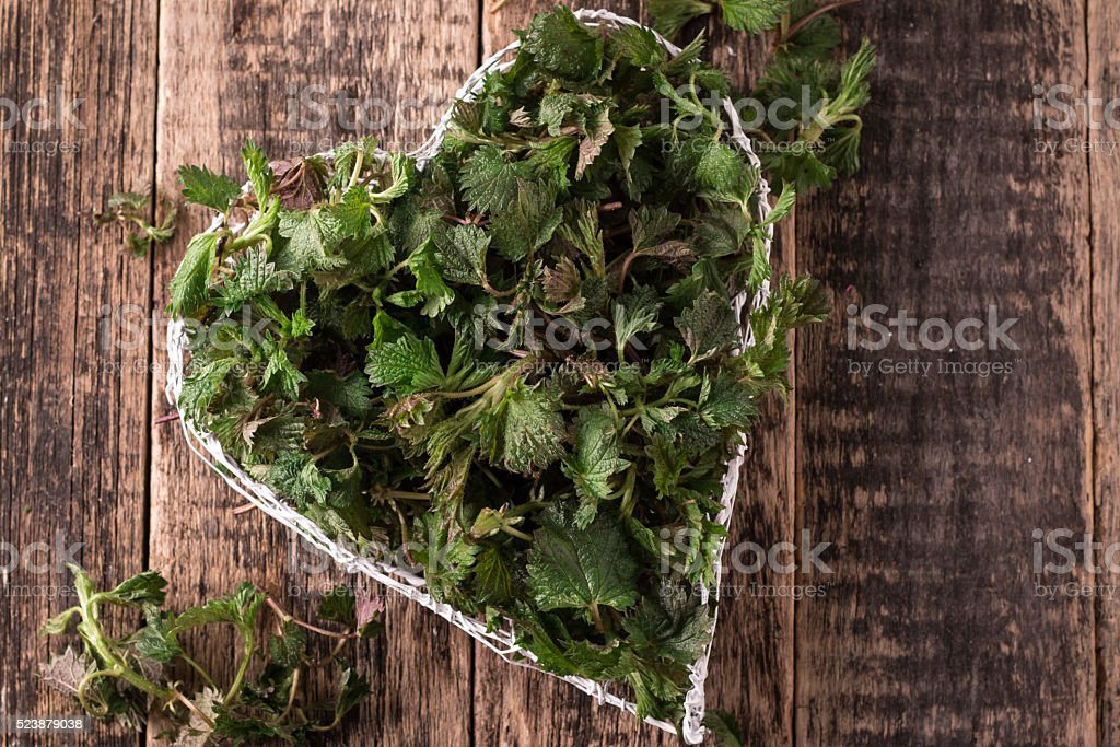 Freshly cut stinging nettles ready for cooking. healthy food stock photo