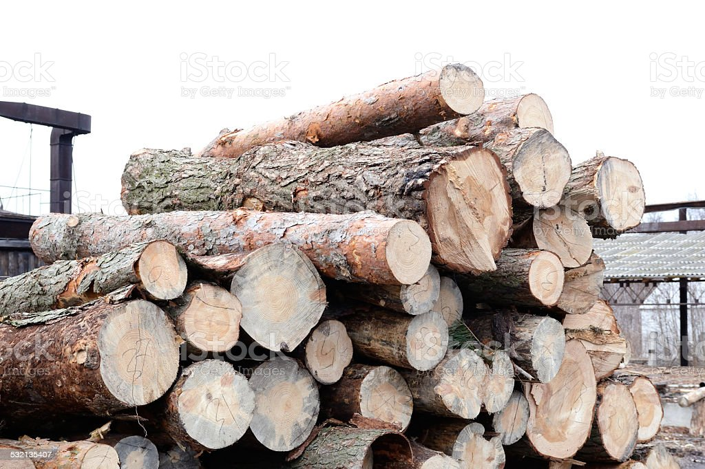 Freshly cut tree pine logs outdoors at winter stock photo
