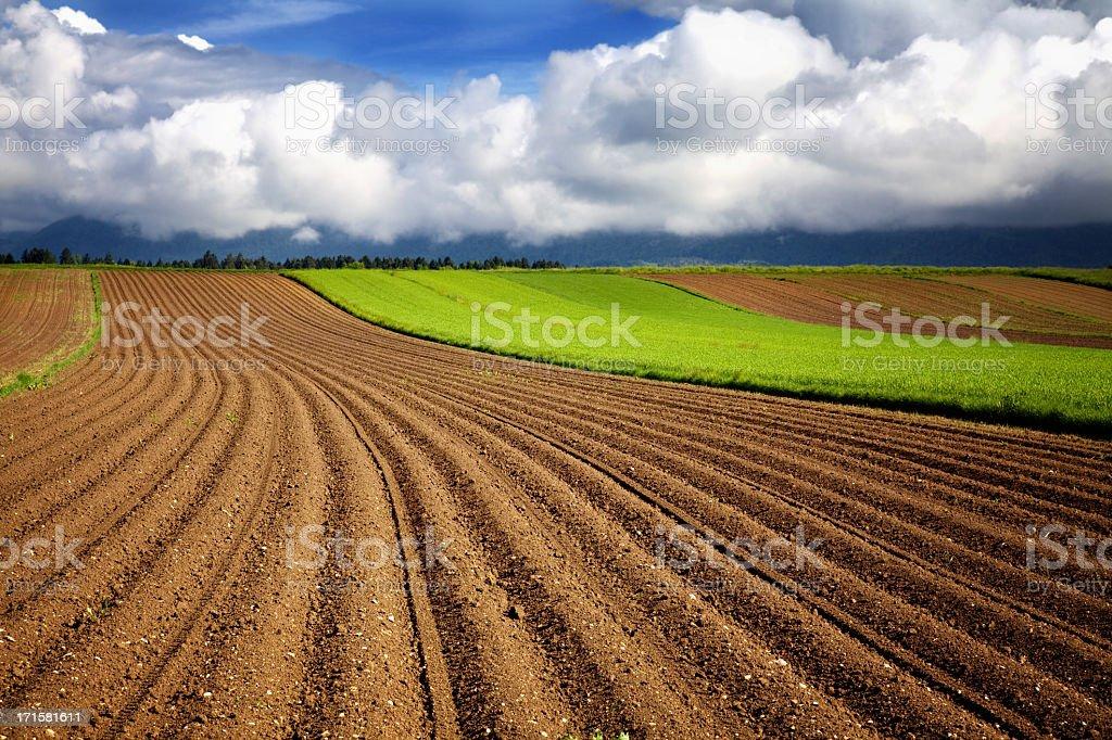A freshly farmed dirt field in Spring stock photo