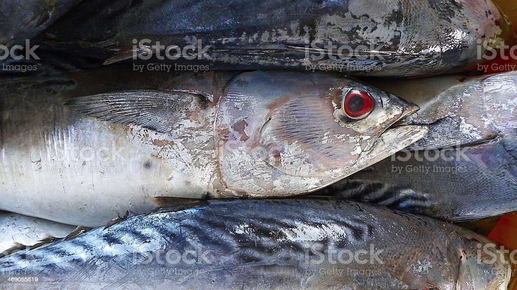 Freshly fish. Abstract background. royalty-free stock photo