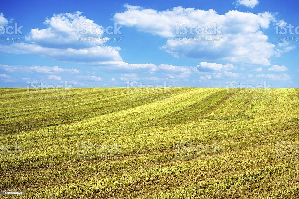 Freshly harvested barley field royalty-free stock photo
