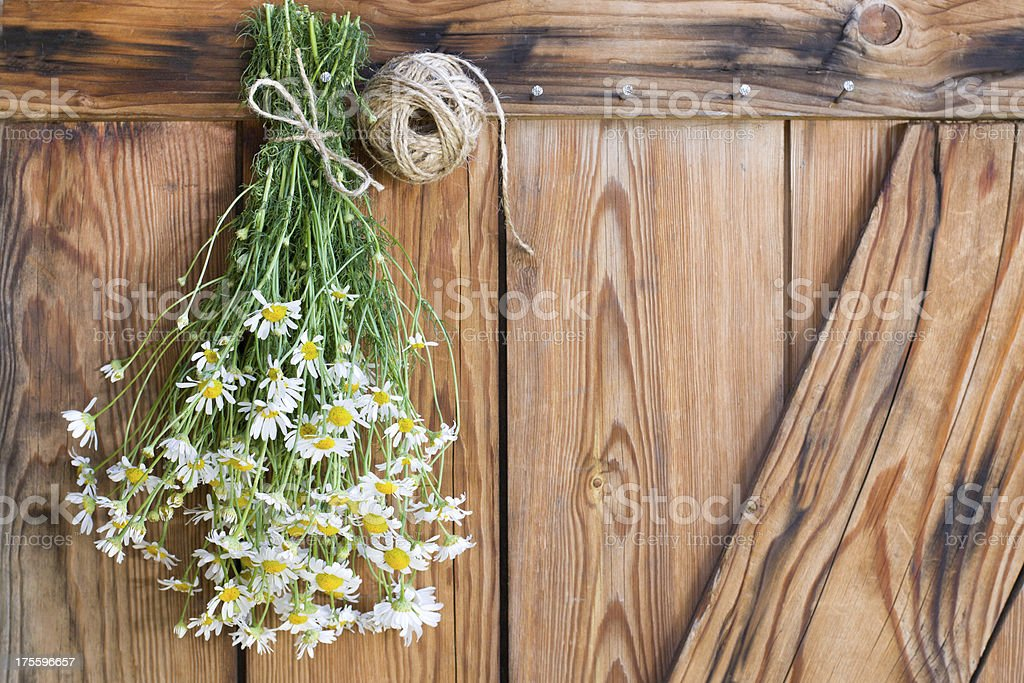 Freshly harvested chamomile royalty-free stock photo