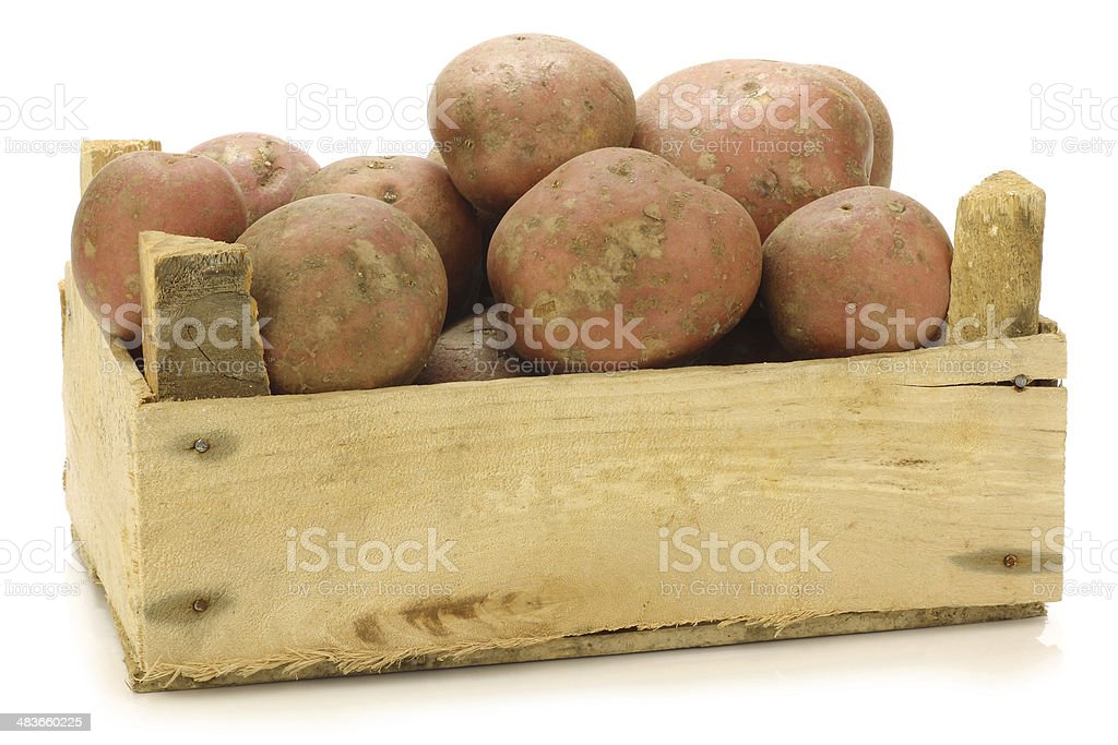 "freshly harvested dutch potatoes called ""Bildtstar"" royalty-free stock photo"