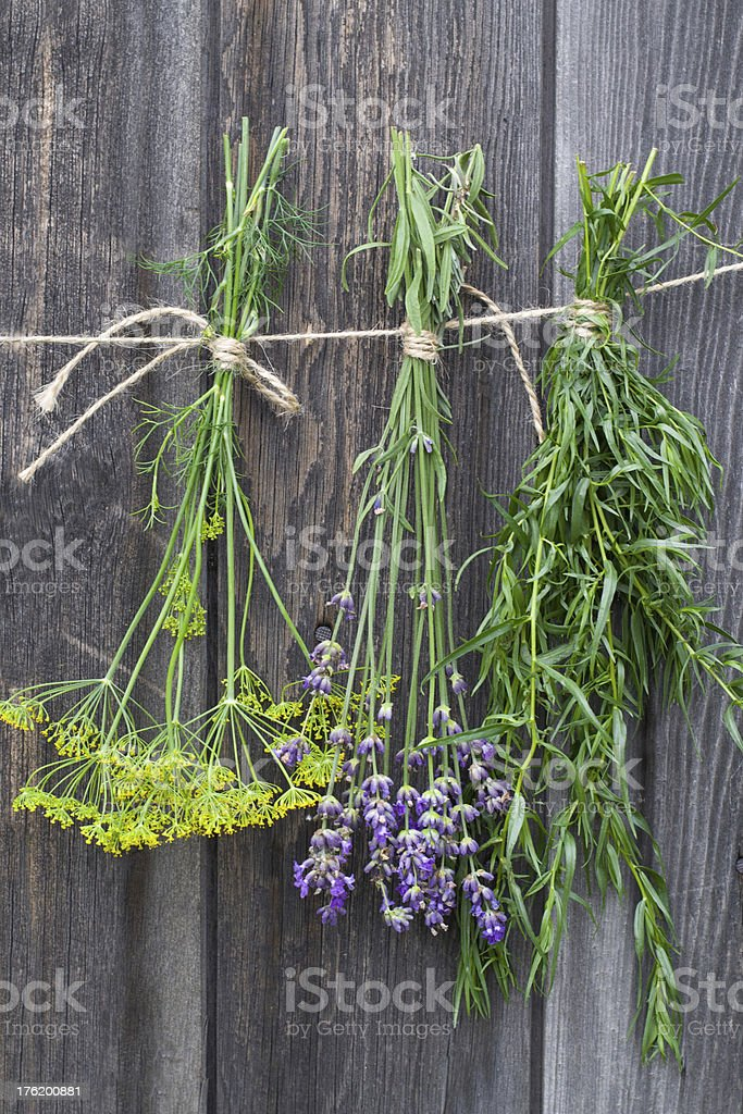Freshly harvested herbs royalty-free stock photo