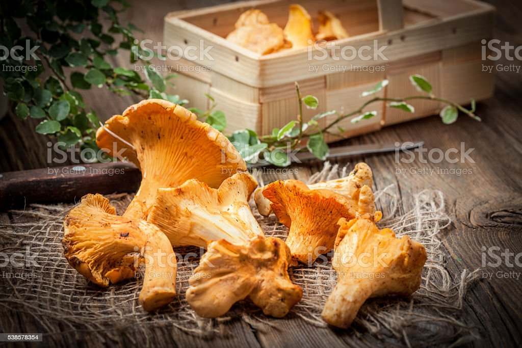 Freshly harvested mushrooms in the forest. stock photo
