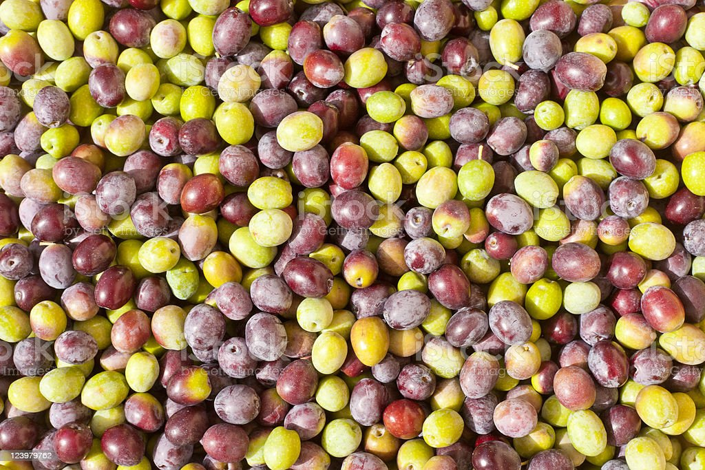 Freshly Harvested Olives Background royalty-free stock photo