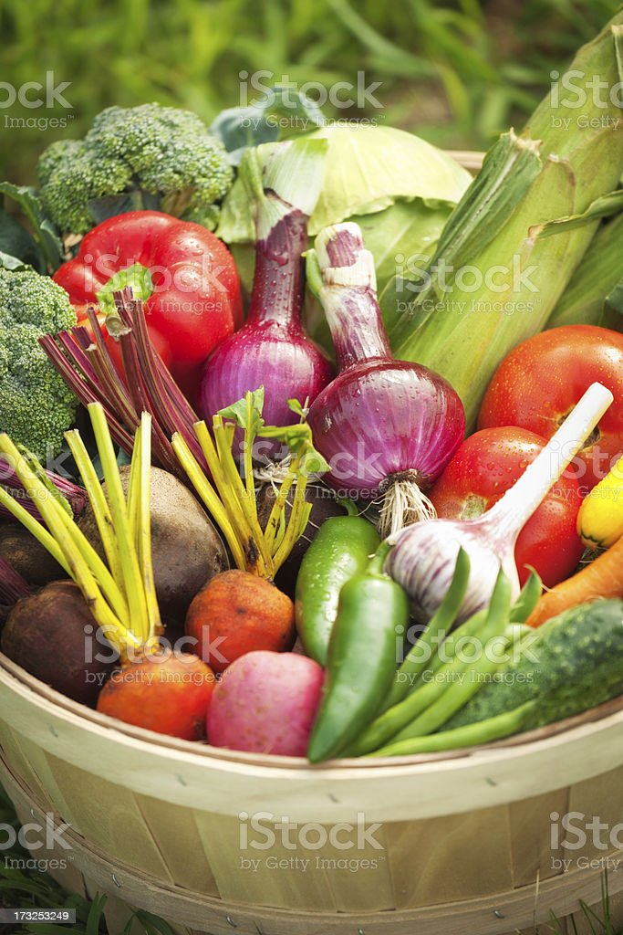 Freshly Harvested Variety of produce and Vegetables in Basket royalty-free stock photo