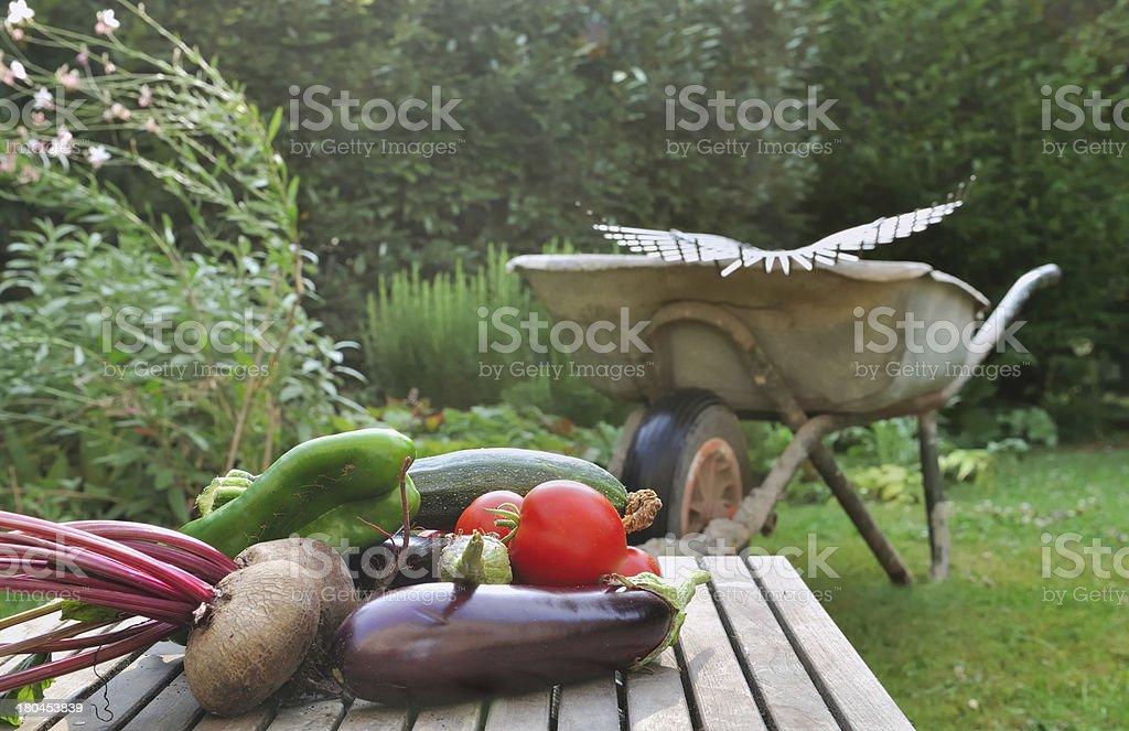 Freshly harvested vegetables royalty-free stock photo