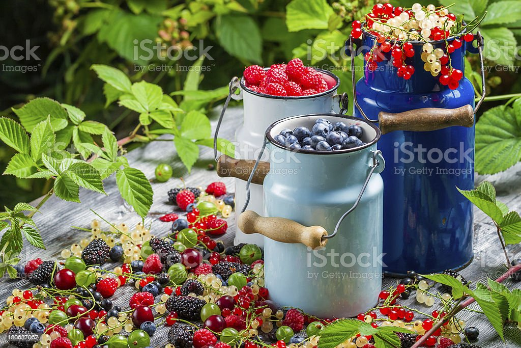 Freshly harvested wild berry fruits in summer royalty-free stock photo