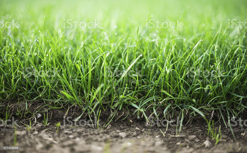freshly laying sod grass lawn stock photo
