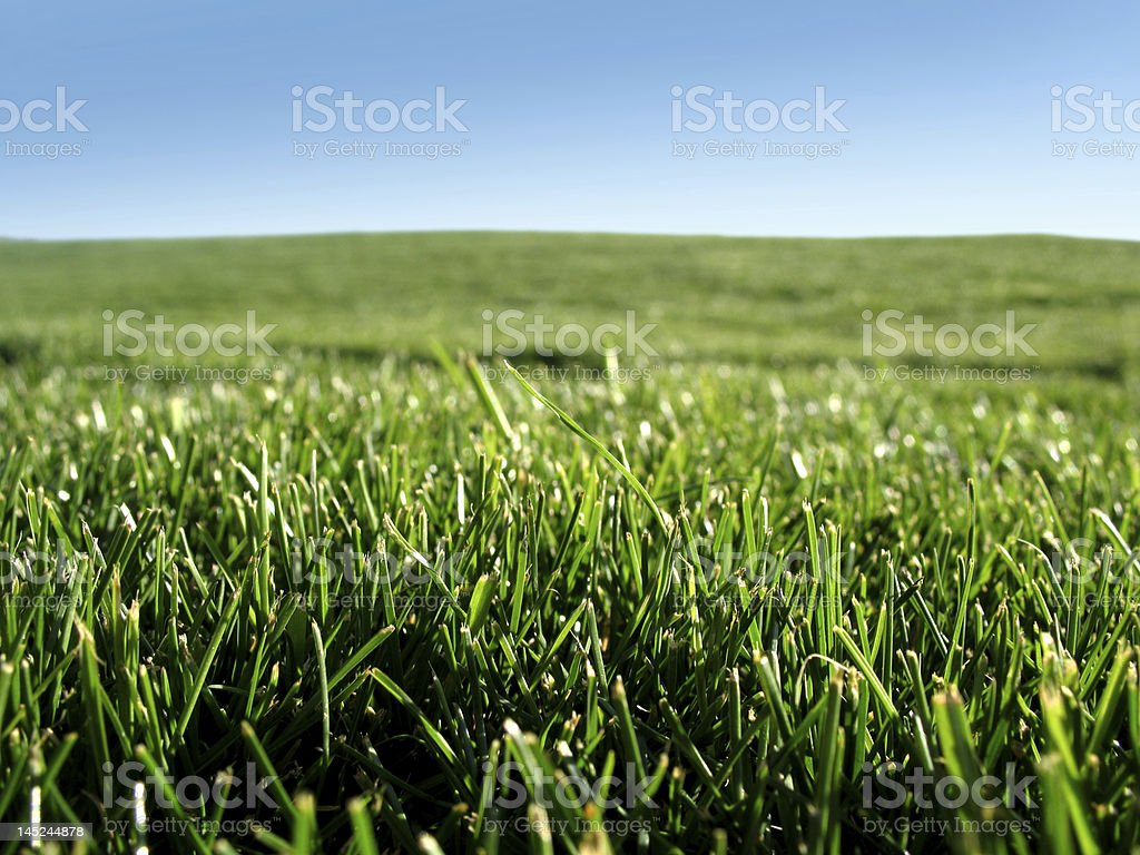 Freshly mowed green grass royalty-free stock photo