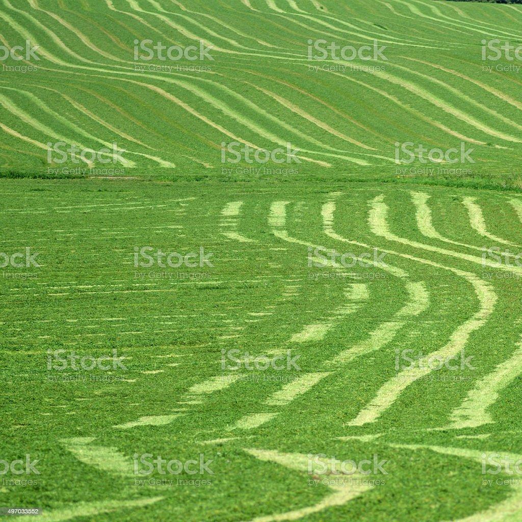 Freshly Mown Meadow, Jütland, Denmark stock photo
