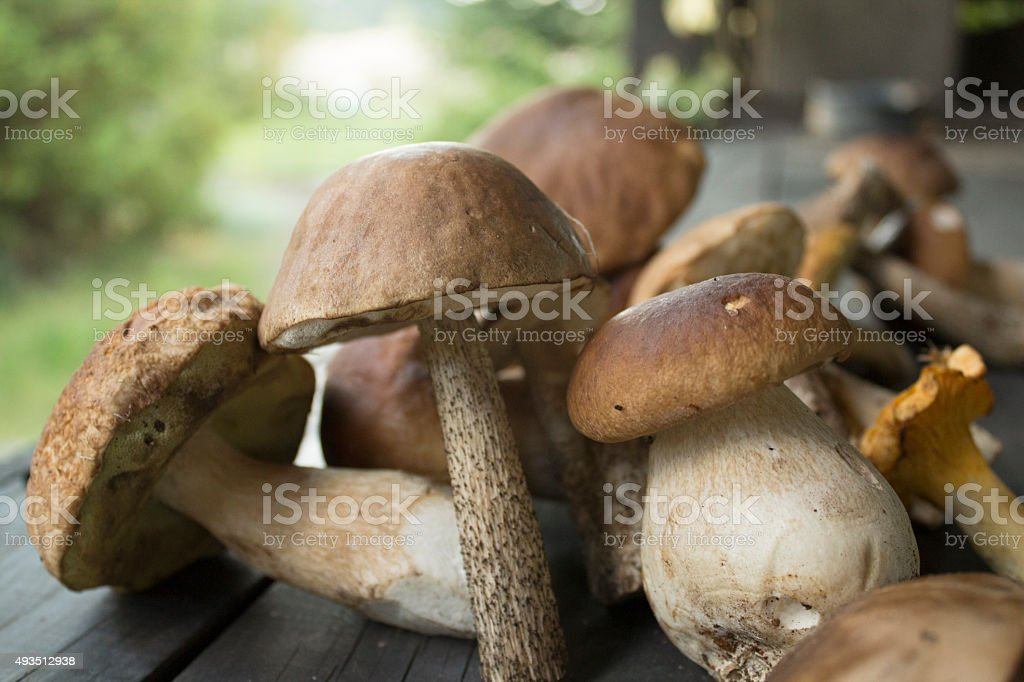Freshly picked edible mushrooms on a table stock photo