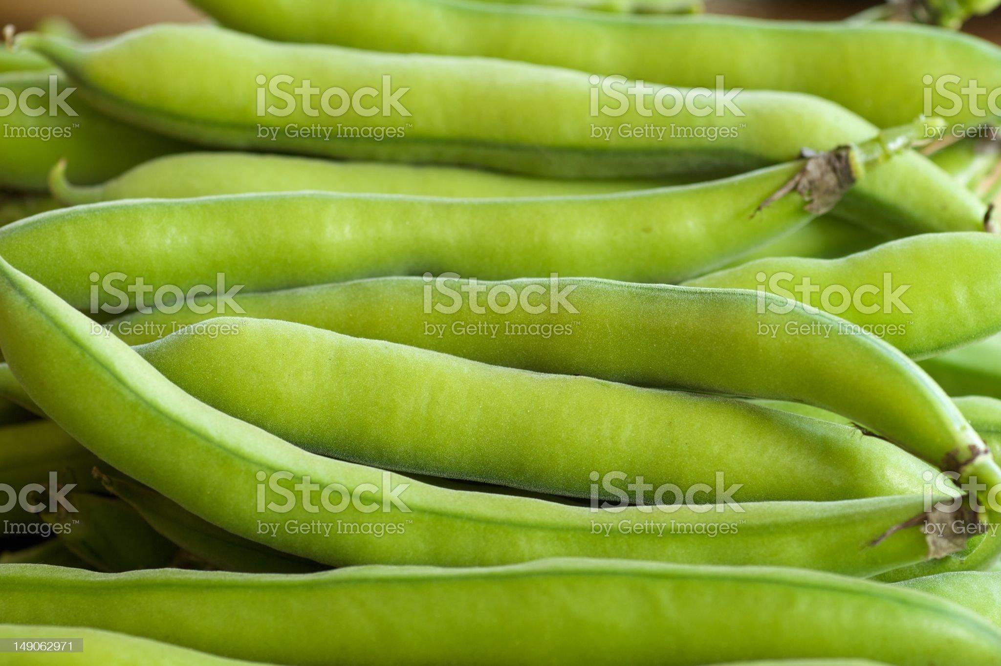 Freshly picked fava beans royalty-free stock photo