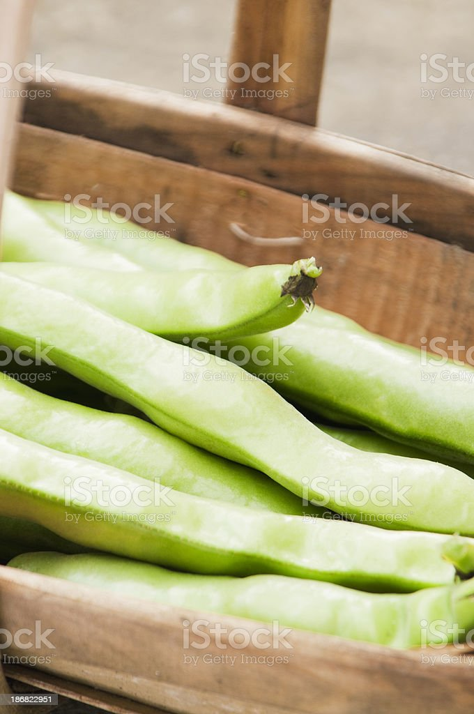 Freshly picked green broad beans in wooden basket royalty-free stock photo