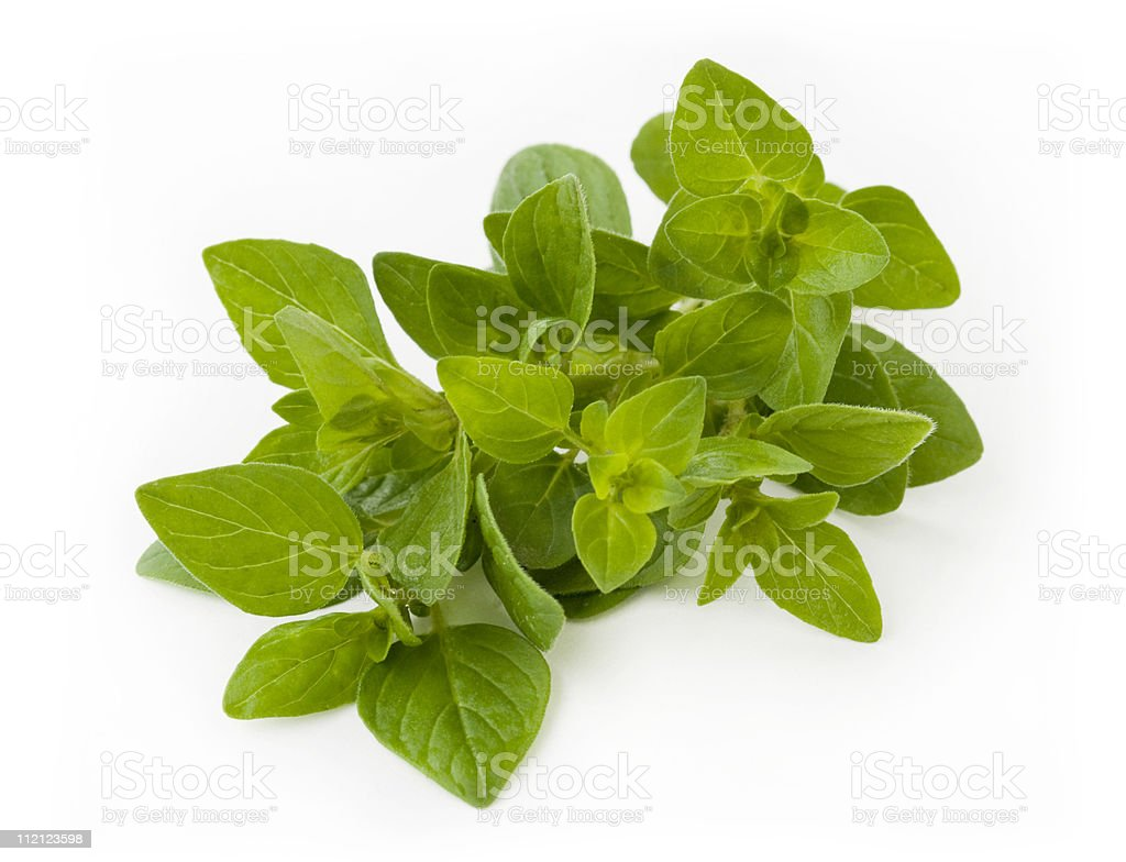 Freshly picked oregano leaves in white background royalty-free stock photo