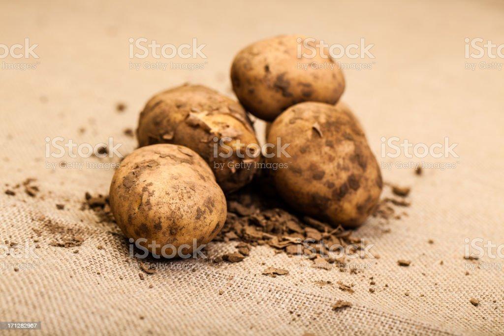 Freshly picked potatoes on hessian sack stock photo
