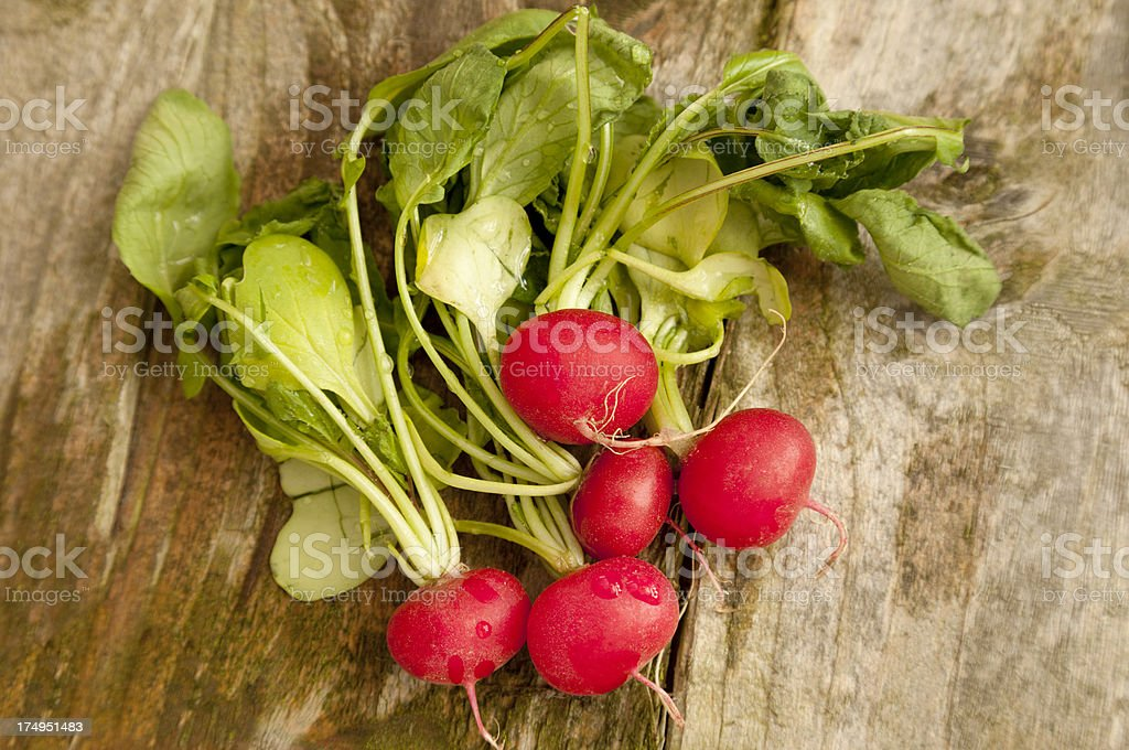 Freshly picked radishes royalty-free stock photo