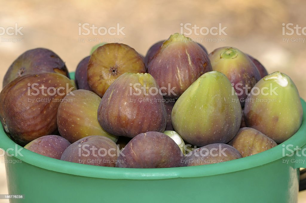 Freshly picked ripe figs royalty-free stock photo