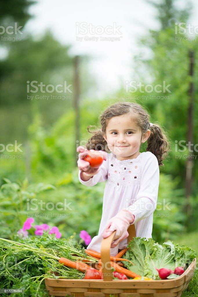 Freshly Picked Tomato and Produce stock photo