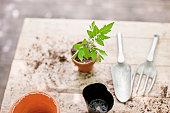 Freshly planted seedling in ceramic flower pot