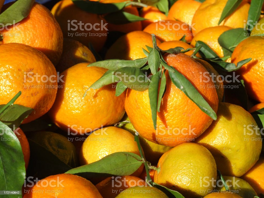 Freshly reaped oranges royalty-free stock photo